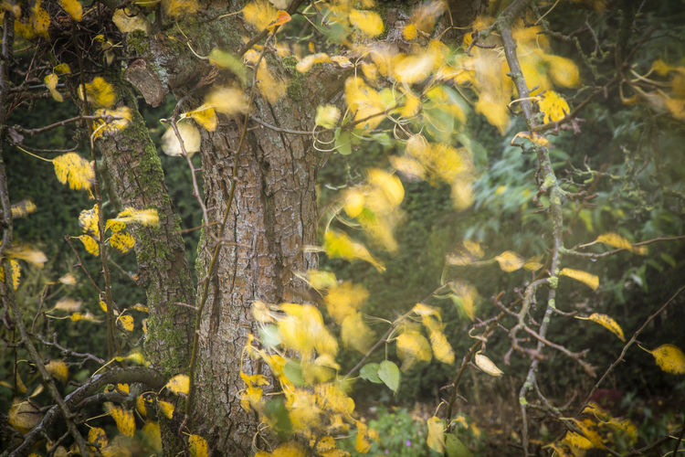 Yellow flowers growing on tree trunk