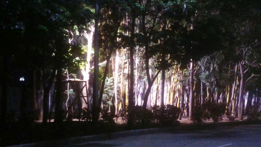JuNglEStyle Bamboo Tree... Bamboo Grove Denseforest Densely Packed Hopes And Dreams Light And Darkness
