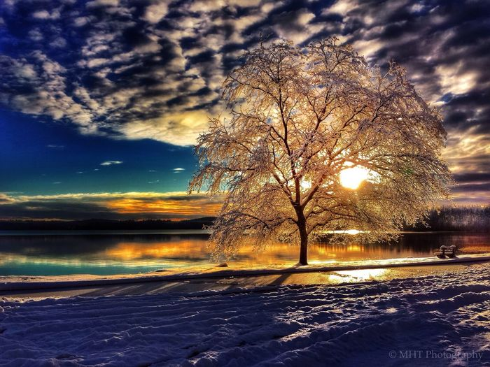 Merry Christmas ♡ Reflection Nature Snow Beauty In Nature Cloud - Sky Winter Tranquility Sun EyeEm Best Shots - Landscape Landscape Tree Dramatic Sky EyeEm Best Shots Cold Temperature EyeEm