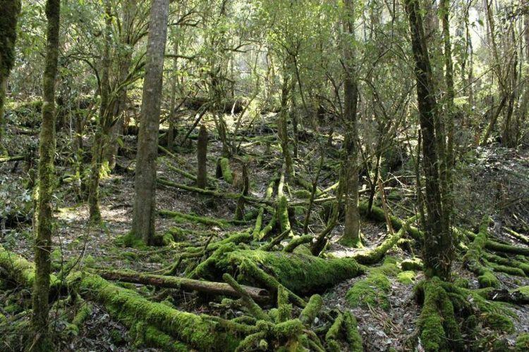 Walk to Russel Falls, Tasmania,AUS. Green Ferns Australia Tasmania Nature_collection Nature