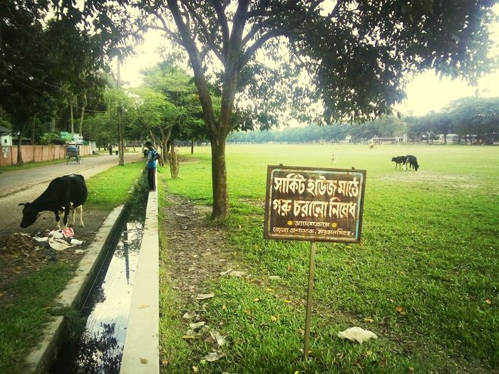 """The signboard says,""""No cows in the circuit house field!!!"""""""