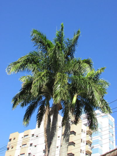 Tree Clear Sky Palm Tree Blue Sky Close-up Green Color