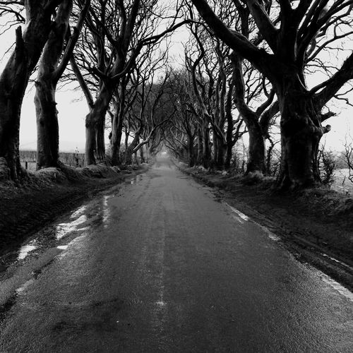 View of wet road amidst bare trees