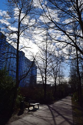 Sunlight Tree Sky Nature Shadow Outdoors Architecture Ways Through The World A Walk In The Park How Is The Weather Today? Magdeburg Benches_Of_The_World_Unite Sunlight Silhouette Sunbeam