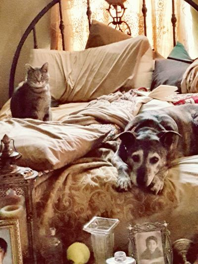 Animal love Pets Dogs Of EyeEm Cat Eyes