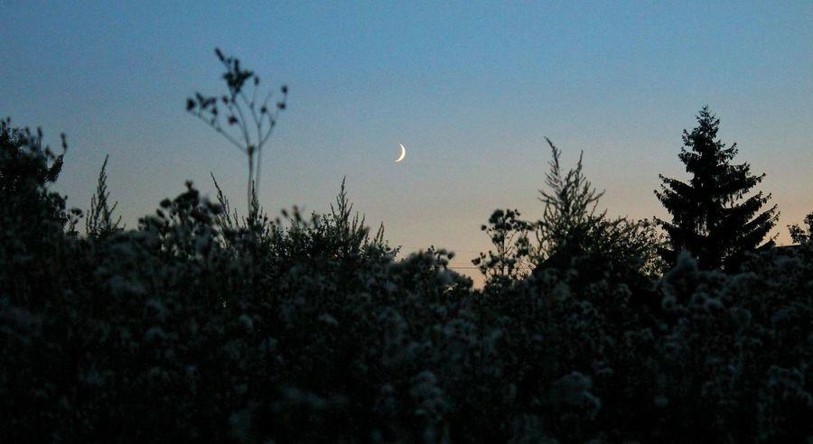 Moon Evening Plants Photo Canon Ukraine