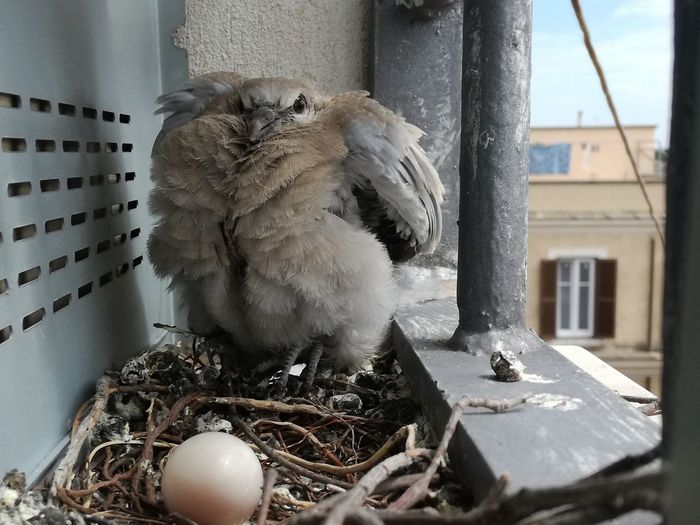 Don't touch my egg. view of a angry bird with egg in the nest