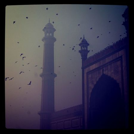 My last shot from the Mosque in Olddehli India . Birds travel jj instagram