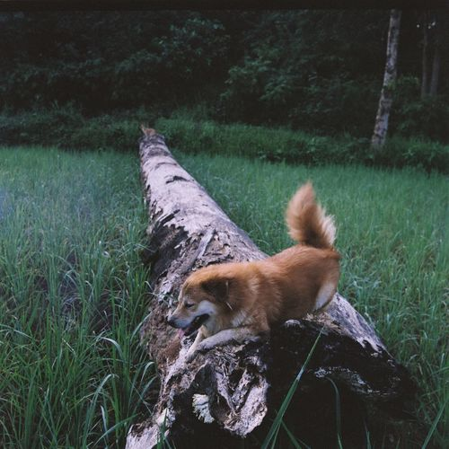 Filmphotography Filmphoto 120 120 Film Film Filmcamera Color Colors Film Photography EyeEm Selects Grass One Animal Plant Animal Themes Animal Mammal Dog Canine Land Growth