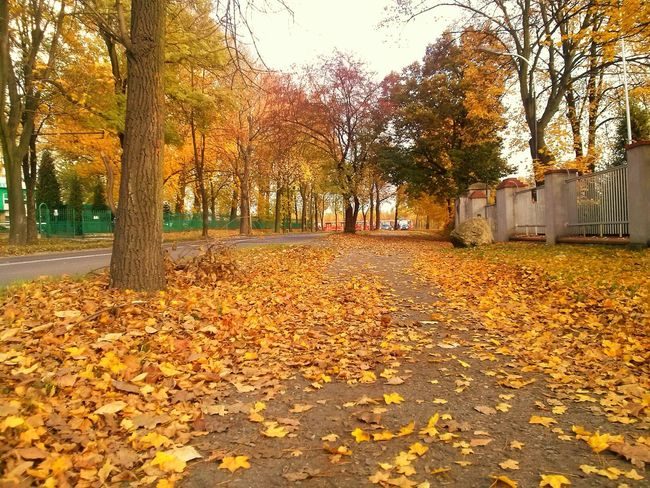 Autumn Autumn Colors Autumn Leaves Leaves Woods Urban Colors Colors Of Autumn Colors Of Nature Zabrze Silesia