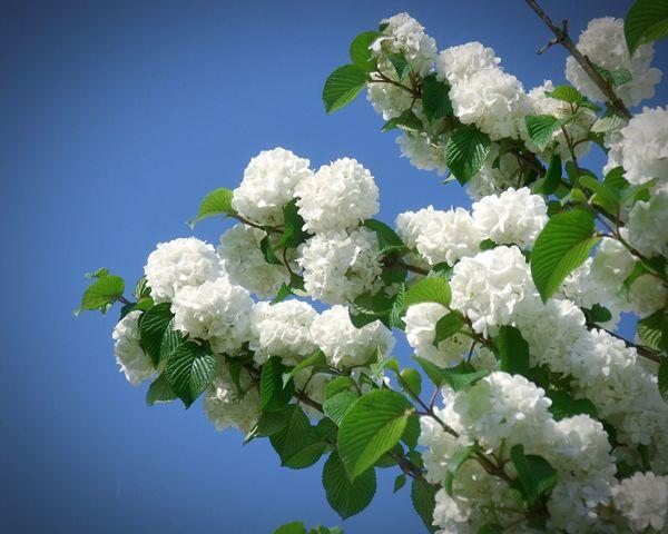 EyeEm Flower Warking♡ Flower Photography Flower Collection White Flower