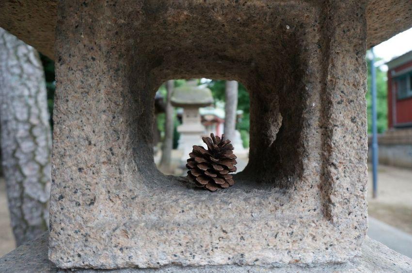 Pinecone StoneLantern Shrine
