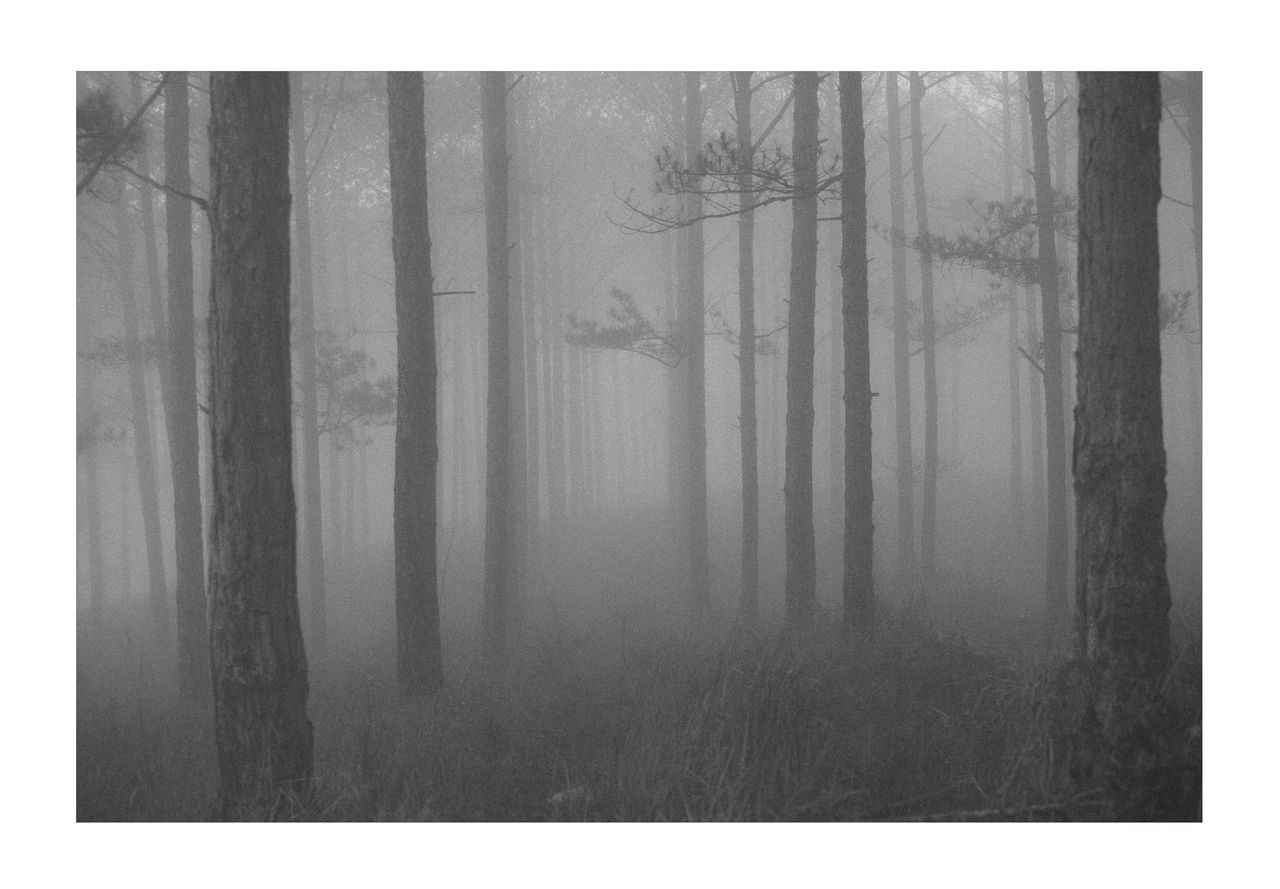 DIGITAL COMPOSITE IMAGE OF TREE TRUNKS IN FOREST