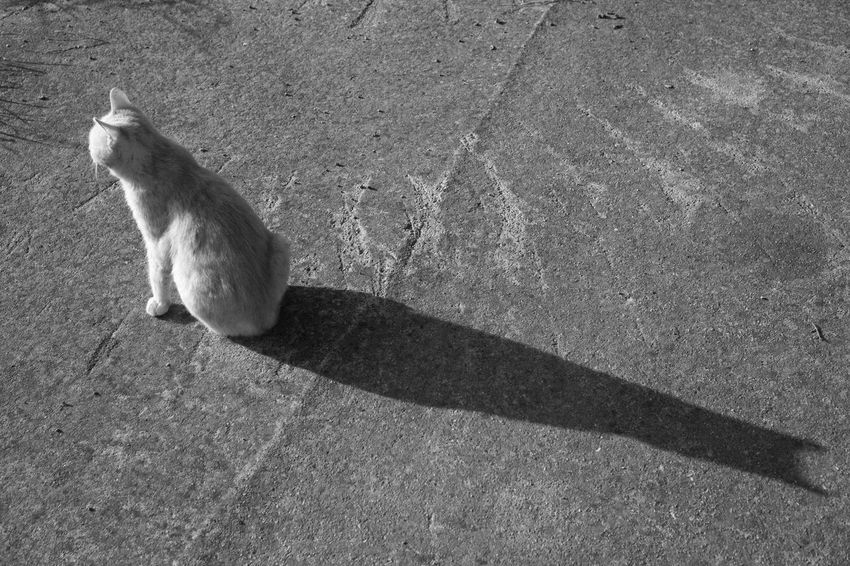 Alone Black & White Cat Perano Shadow Shadowplay Shadows & Lights Streetphotography