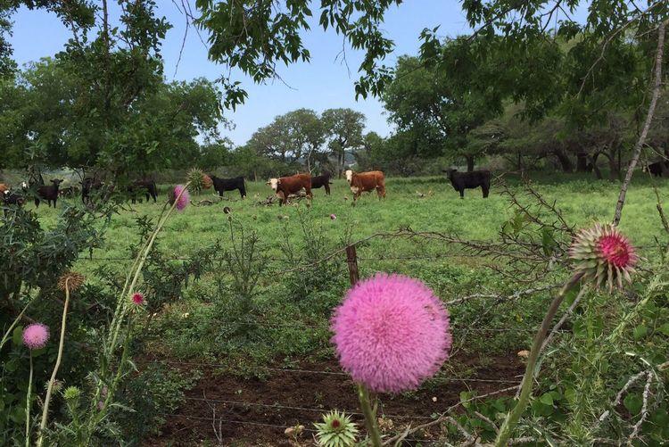 Nature Livestock No People