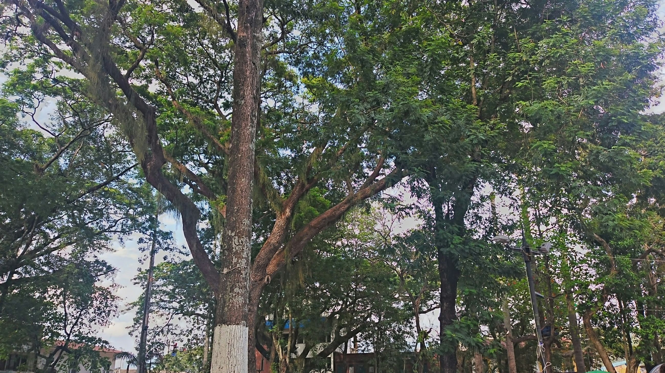 tree, growth, green color, low angle view, branch, tree trunk, tranquility, nature, beauty in nature, lush foliage, day, green, outdoors, sunlight, tranquil scene, palm tree, scenics, forest, no people, sky