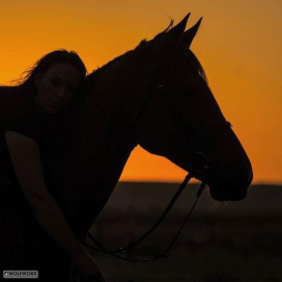 @Instag_app Horses Horse Horsesofinstagram Pentax Silhouette Horses_of_instagram Horsestagram Instahorses Wild Sunset Field Farm Nature Appaloosa Ilovemyhorse Wolfworx Beautiful Pretty Photooftheday Rider Riders Riding