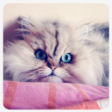 I Love My Cat Catlove