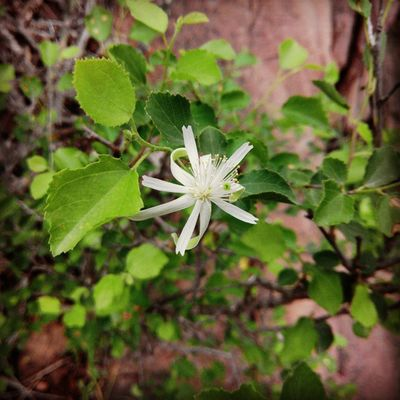 @jungle Flower Ig_ahmedabad Ig_gujarat Like4like Follow4follow Picoftheday Likeforlike Flower Instaclick Instagram