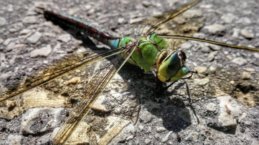 Nature Nature_collection EyeEm Nature Lover Dragonfly Macro Macro_collection