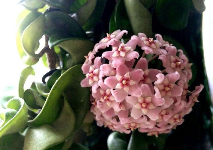 Flower Pink Wonderful Spring