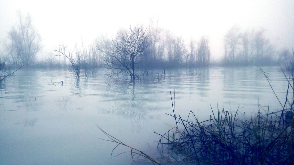 Nature Tree Fog Lake Water Scenics Beauty In Nature Tranquility Outdoors Grass Reflection Landscape Garut_missyou GarutEndah Garutwestjava