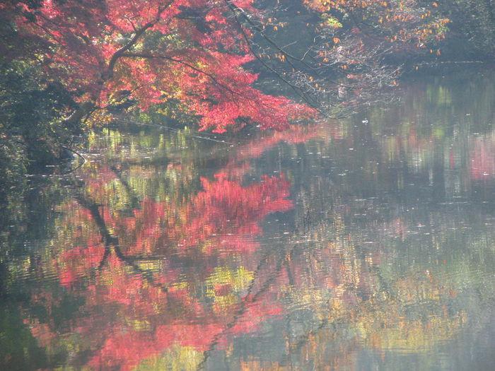 Relaxing Nature 紅葉 Japan