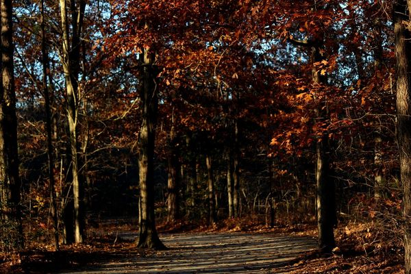 Trees Leaf Leaves🌿 Path Trail Tree Tree Forest Autumn WoodLand Nature Outdoors Tree Trunk Tree Area Beauty In Nature No People Branch Scenics EyeEmNewHere