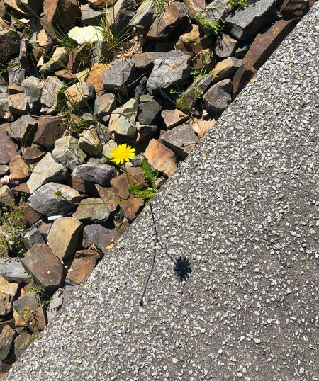 High angle view of flowering plants by rocks