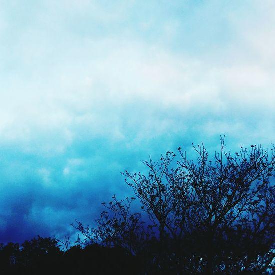 Wintertime Tree And Sky Treetastic Old Tree