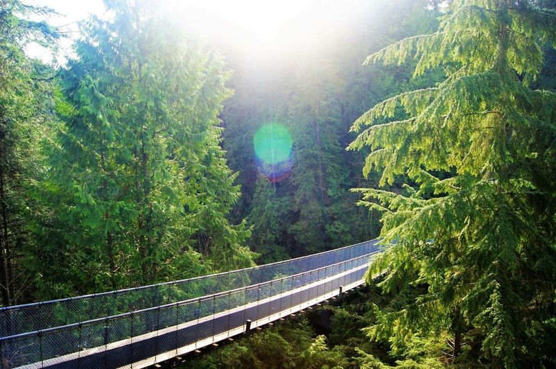 Perspectives On Nature puente capilano North Vancouver