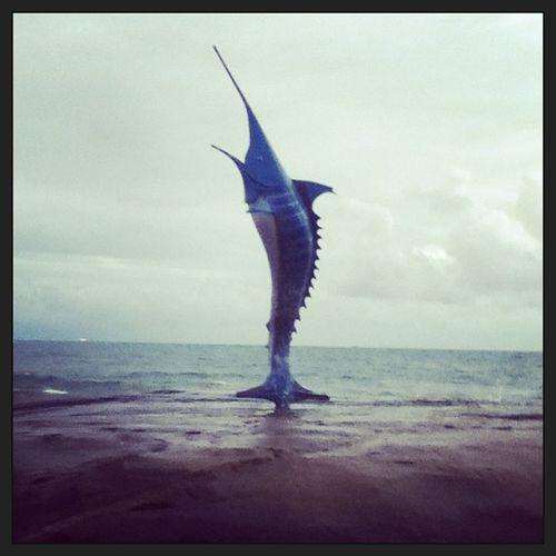 Marlin o/ GuarapariBeach Fish Beautiful