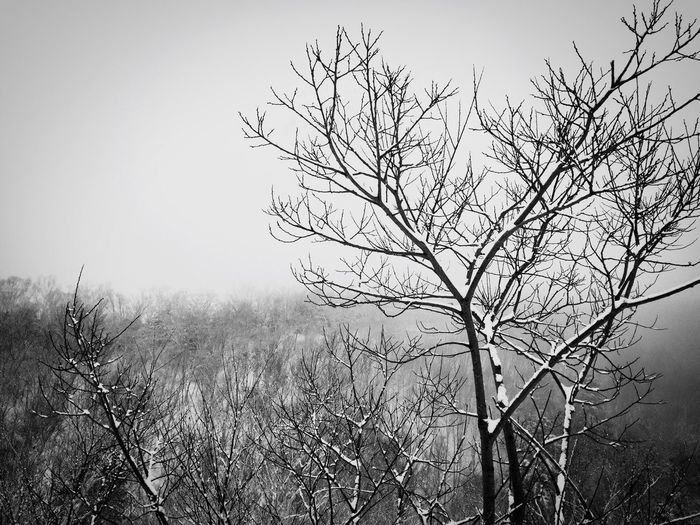 Winter Wonderland Bare Tree Nature Outdoors Branch Landscape Growth Beauty In Nature No People