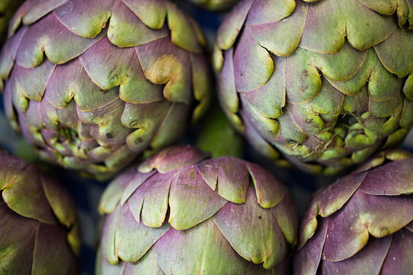 Artichoke Backgrounds Close-up Day Food Food And Drink Freshness Full Frame Healthy Eating Leaf Nature No People Outdoors Purple Thistle Vegetable
