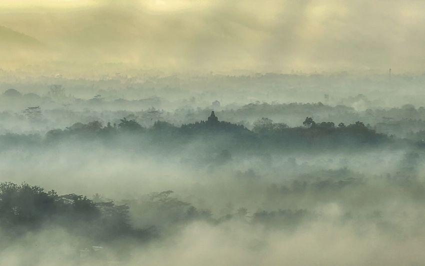 Fog Morning