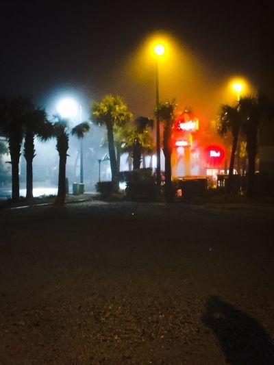 Palm tress and lights Beach Night Life Illuminated Night Street Street Light City Transportation EyeEmNewHere