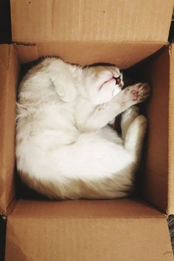 Cats are liquid Pets Mammal Animal Themes One Animal Domestic Animals Indoors  Relaxation Domestic Cat No People Cardboard Box Close-up Day