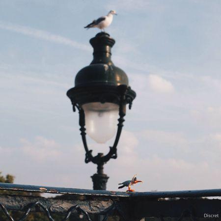 Mouette Gaston Lagaffe Seagulls Humour