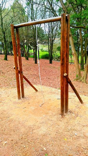 Playground Outdoor Play Equipment Monkey Bars Childhood Sunlight Jungle Gym Tree Outdoors Sand No People Swing Nature Day Nofiltersrequired Nofilters Forest Walk Forestphotography Close-up Myway Nature Walking Playing Field Forest Road