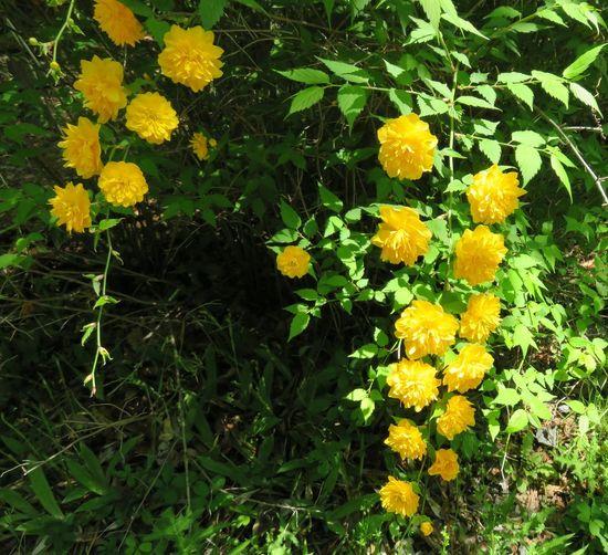 はな 花 はな 黄色 植物
