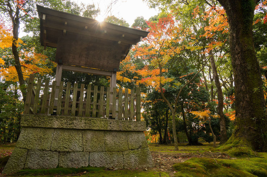 Architecture Autumn Beauty In Nature Branch Built Structure Day Fall Growth Nature No People Outdoors Sky Tree Water
