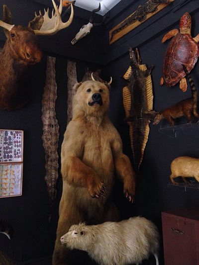 rhetoric. Indoors  No People Low Angle View Animal Themes Mammal Bear Museum Taxidermy Science