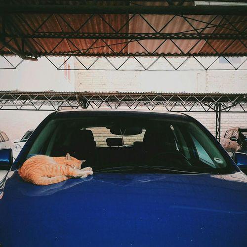 """Cat in da 'hood"" Streetphotography Cat AMPt Community Shootermag"