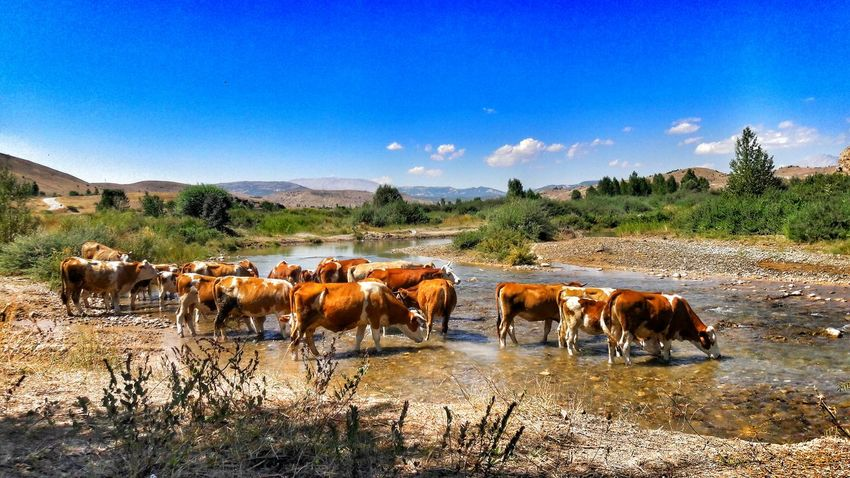 Internal Cow Stream Photography Photo EyeEm Gallery 🐄🐮🐄🐮