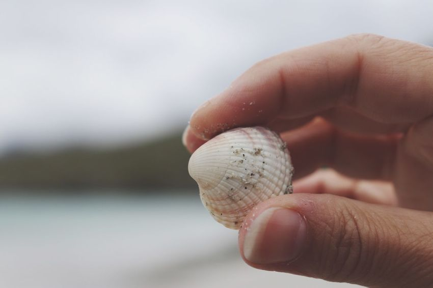 EyeEm Selects Human Hand Hand Human Body Part One Person Holding Shell Finger Animal Shell Real People Close-up Focus On Foreground Human Finger Animal Wildlife Body Part Seashell Unrecognizable Person Day Lifestyles Outdoors