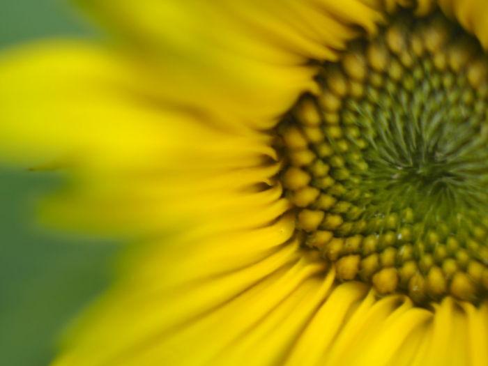 Close-up of yellow flower pollen