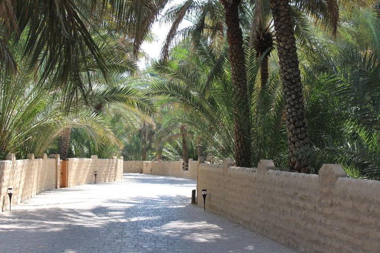 UAE, Al Ain No People Oasis Park