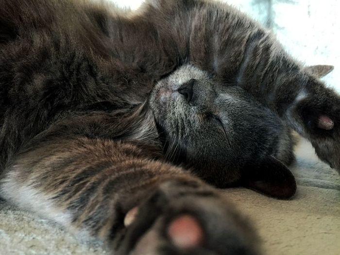 Sleepy cat..