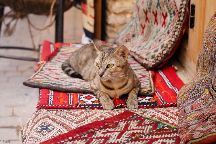 Tabby Cat Sitting On Mats