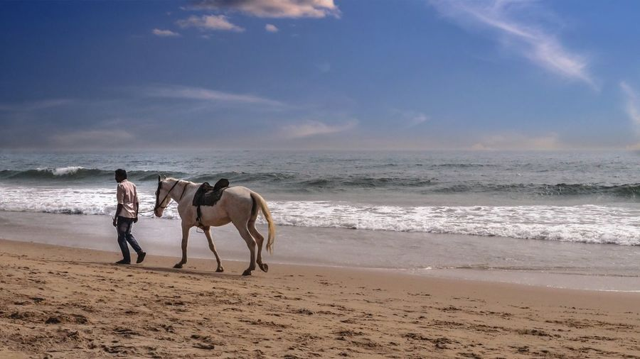 Man with horse walking at beach